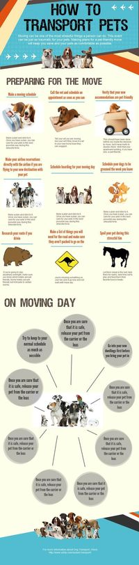 Moving your pet is never easy. How to make the move as stress free as possible.