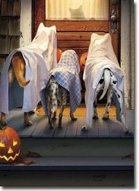 Halloween Images | Trick Or Treat?