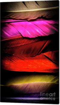 Colours Of A Feather Wall Art | Vivid nature artwork on many soft beautiful feathers in wild shades of rainbow colours | #colorfulart #colourfuldecor #featherart #homedecor #interiordesign #colors #interiordecorator #interiordecor
