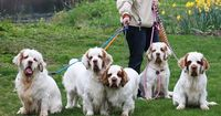 Clumber Spaniels- If I ever got another dog, this is what I'd get. They are cute, smart, and good with kids.