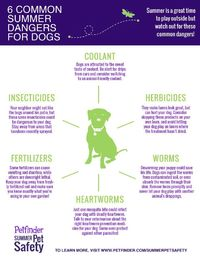 These 6 dangers are common but deadly. repost to protect dogs! Click through to learn more about how to keep your pet safe.