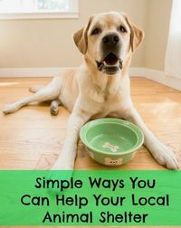 Simple Ways You Can Help Your Local Animal Shelter #dogs #cats #payitforward