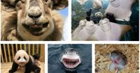 funny-animals-laughing-smilingWhat a happy animal kingdom