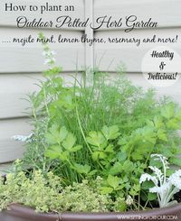 A potted container of fresh herbs is a handy and quick way to add snippets of flavour for salads and drinks! How to plant an easy outdoor herb garden pot