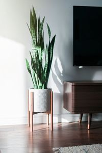 Mid century modern plant stand, Inspired by the 1950s... this beautiful mid century style plant stand is the perfect decor piece for any room. Made from locally sourced wood. The stands have been stress-tested at over 100LBS to ensure it can withstand the...